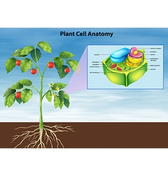 Anatomy plant cell vector
