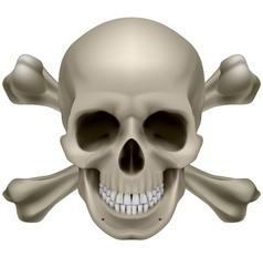 Realistic skull and bones vector