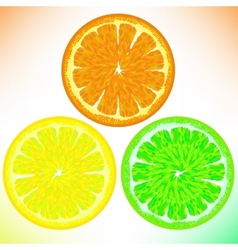 Orange lemon lime vector