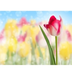 Pink tulip create with a selective focus eps 10 vector