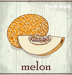 Hand drawing of melon fresh fruit sketch vector