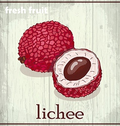 Hand drawing of lichee fresh fruit sketch vector