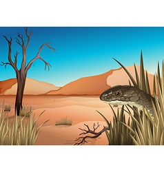 A reptile at the desert vector