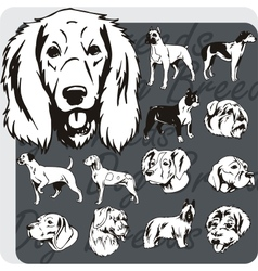 Dog breeds - set vector
