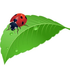 Ladybird on grass with water drops vector