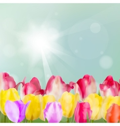 Tulip flowers on blue background eps 10 vector
