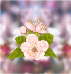 Cherry blossom blur nature background vector