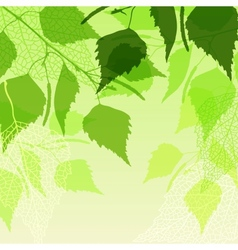 Fresh background of green birch leaves vector