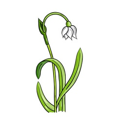 Loddon lily isolated on the white vector