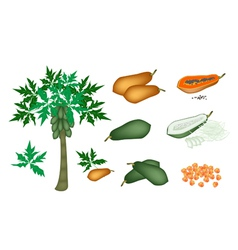 A set of fresh papayas and papaya tree vector