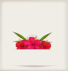 Hibiscus background vector