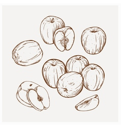 Set of drawing apples golden delicious vector