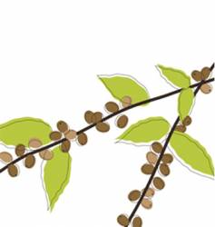 Coffee plant with berries vector