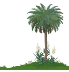 Palm tree and plants yucca vector
