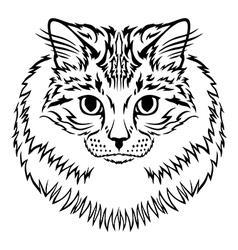 Siberian cat vector