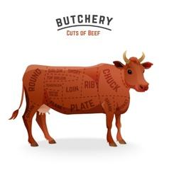 Beef cuts diagram vector