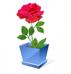 Red rose flower in pot vector