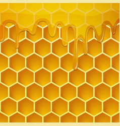 Honeycomb with honey background vector