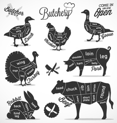 Diagram guide for cutting meat in vintage style vector
