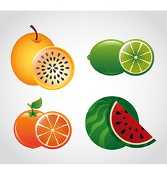 Fruit fresh vector