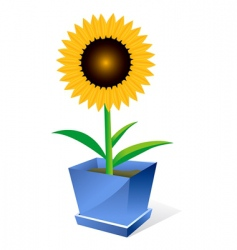 Sunflower spot concept vector