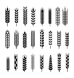 Wheat ear icon set graphic design elements black vector