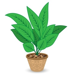 Plant in flowerpot isolated on white background vector