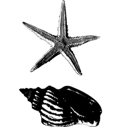 Shell and starfish vector