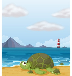 A turtle in the shore vector