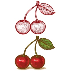 Cherry retro vector