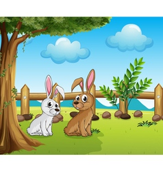 Two bunnies inside the fence vector