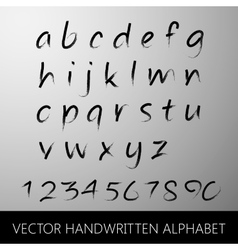 Handwritten alphabet calligraphic brushed letters vector