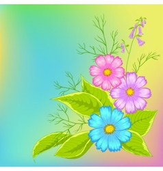 Flower background cosmos vector
