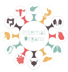 Icons of internal human organs vector