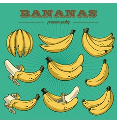 Banana sethand drawn bananas vector