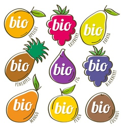 Set of organic fruit vector