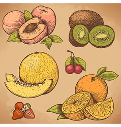 Engraving fruits color vector
