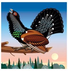 Wood grouse vector