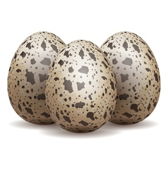 Quail eggs isolated vector
