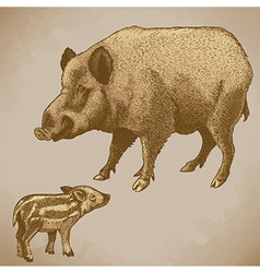 Engraving boar retro vector