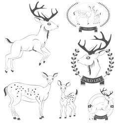 Set of vintage deer emblems labels logo vector
