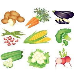 Vegetables popular set vector