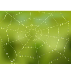 Dew drops on the web with nature background vector