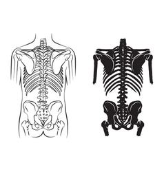 Human bone anatomy vector