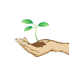 Green plant growing in hand vector
