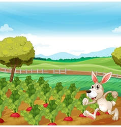 A bunny running in the farm vector
