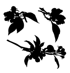 Collection of blossom aplle flowers silhouette vector