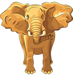 Red african elephant vector