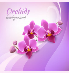 Orchid background template vector