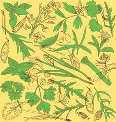 Pattern with herbs vector